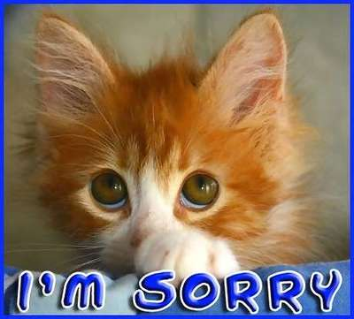 "Image description: Cat with sad eyes, ""I'm sorry"" written below the image"